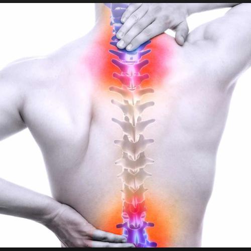 Segmente ale reflexelor somatice spinale