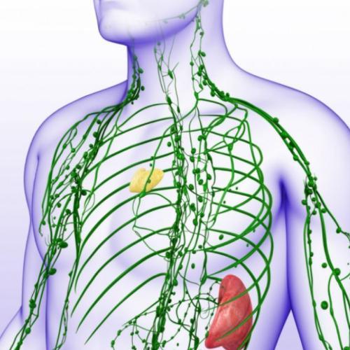 Acțiune asupra sistemului limfatic